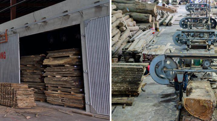 Quá trình xẻ gỗ, và tẩm sấy gỗ chống cong vênh mối mọt